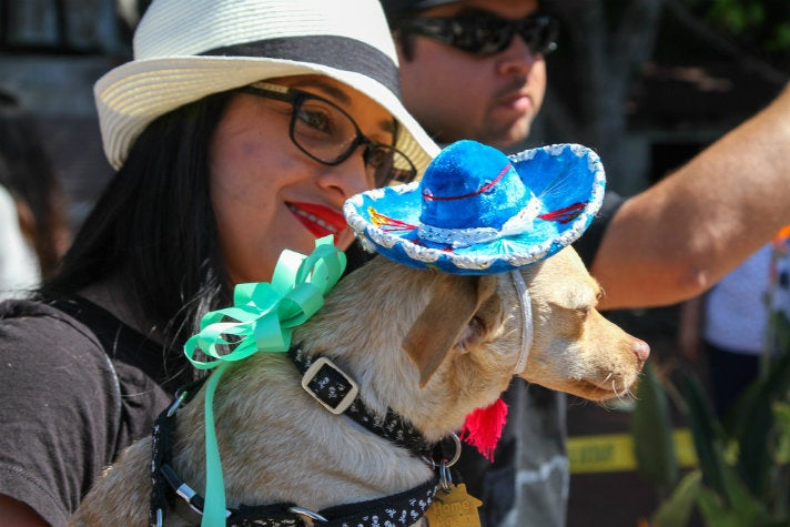 Blessing of the Animals on Olvera Street